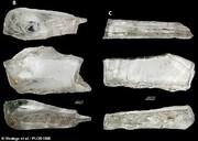 کشف ابزارهای باستانی ۴۵هزار ساله در سریلانکا