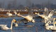 پایش صیدگاههای فریدونکنار برای حفاظت از پرندگان