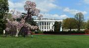 ترامپ کارکنان شورای امنیت ملی آمریکا را کاهش میدهد