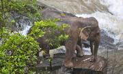 فیلم ا عملیات نجات یک فیل عصبانی در هندوستان