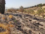 ۹۵ هکتار از پارک جنگلی چیتگر آسیب دیده است