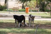عزم شهرداری خرمآباد برای جمعآوری سگهای ولگرد
