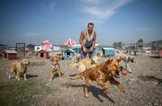 عکس روز: ساخت پناهگاه سگها با کمکهای مردمی