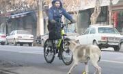 پای سگهای ولگرد به مرکز شهر باز شد