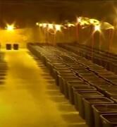 فیلم | کشف مزرعه ماری جوانا پشت دوش حمام یک خانه