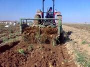 سیر تا پیاز کشاورزی کردستان
