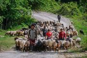 چراغهای روشن زندگی عشایر در مازندران