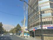 ورود محیط زیست به موضوع خشک شدن چنارهای خیابان ولیعصر