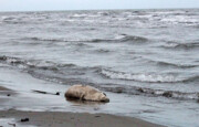 انتقال آب دریای خزر، جنگلهای هیرکانی را نابود میکند