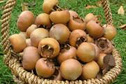 طعم پاییزه جنگلهای مازندران