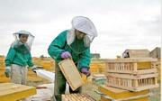 روی خوش بازارهای جهانی به عسل اردبیل