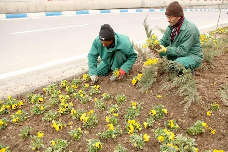 کاشت گونههای نو در فضای سبز زنجان