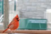 تاثیر آلودگی صوتی بر آواز پرندگان