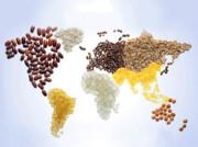 روز جهانی غذا | رفتار ما آینده ما را میسازد