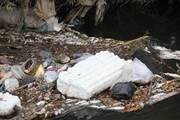 تصاویر   مرگ ماهیها به علت ورود پساب صنعتی