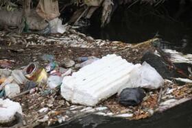 تصاویر | مرگ ماهیها به علت ورود پساب صنعتی