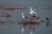 نسلکشی پرندگان اینبار در خوزستان
