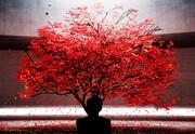 عکس روز: پاییز روی الایدی