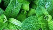 آشنایی با خواص بینظیر سبزیجات معطر در رژیم غذایی