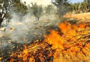 ۷۲۰ هکتار جنگل و مرتع کهگیلویه و بویراحمد در آتش سوخت
