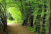 جشن ثبت جهانی جنگلهای هیرکانی در ۵ استان