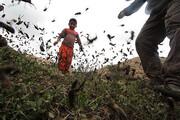 ملخها بازمیگردند؛ از هند و پاکستان