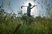 اجرای آییننامه اصلاحی نظام صنفی کشاورزی مدیریت قوی میخواهد