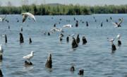 خطر آنفلوآنزا جدی است   شکار پرندگان مهاجر ممنوع