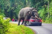 عکس روز: فیلی که ماشین را له میکند