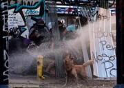عکس روز: سگ شورشی