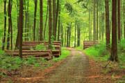 واگذاری ۷۵ درصد جنگلهای ایران به بخش خصوصی | عامل اصلی نابودی جنگلها