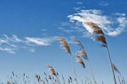 پیشبینی جو آرام و پایدار در بیشتر مناطق کشور
