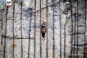 عکس روز: دیوار برلین؛ سیسال بعد