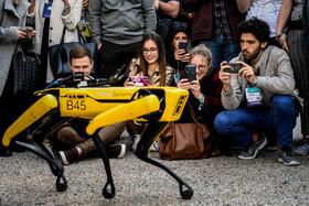 عکس روز: سگ رباتی به نام اسپات
