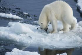 گسترش ویروس مرگبار با آب شدن یخها