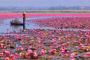 تالاب انزلی محل تخمریزی ماهیان مهاجر شده است