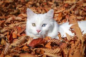 عکس روز: برنده مسابقه گربههای خوشحال