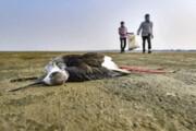 مرگ مشکوک هزاران پرنده در راجستان هند