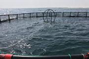 تولید ۱۷۰۰ تن ماهی در دریاچه کارون ۴ چهارمحال و بختیاری