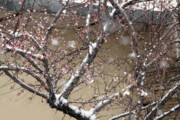 پیشبینی بارش برف در مناطق زلزلهزده
