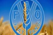 همکاری فائو و دولت ایران برای بهبود نظام پایش کشاورزی کشور