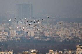 راهکارهای مقابله با آلودگی هوا | مصرف مایعات و غذای سبک فراموش نشود