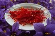 مصرف زعفران در کاهش افسردگی موثر است