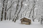 برف و باران تا پایان هفته مهمان ایران است | کاهش ۱۰ درجهای دما