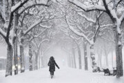 پیشبینی بارش در اغلب مناطق ایران | برف از ظهر در تهران شدید میشود