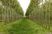توسعه زراعت چوب در دستور کار سازمان جنگلها