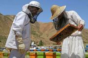 تولید عسل در شاهیندژ از مرز ۷۰۰ تن گذشت