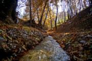 تصاویر: طبیعت پاییزی «مهنان»