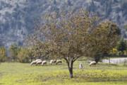تصاویر | پاییزانههای رودبار