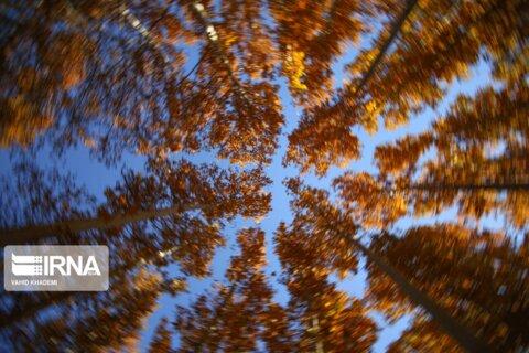 طبیعت پاییزی مهنان